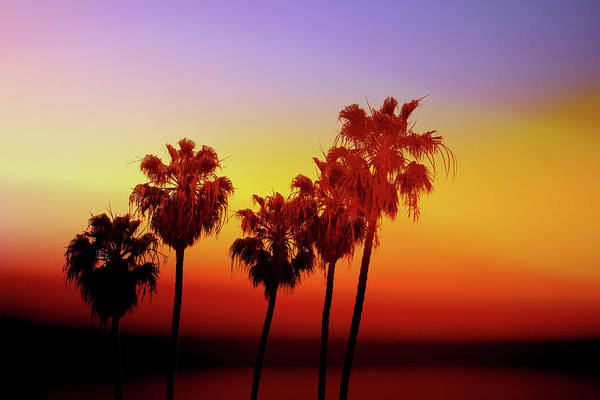 Sunset Palm Trees- Art By Linda Woods Poster