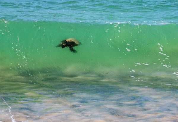 Surfing Turtle Poster