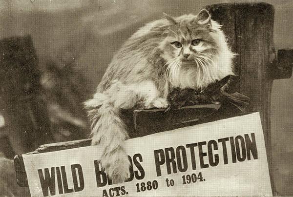 The Bird Bandit Poster