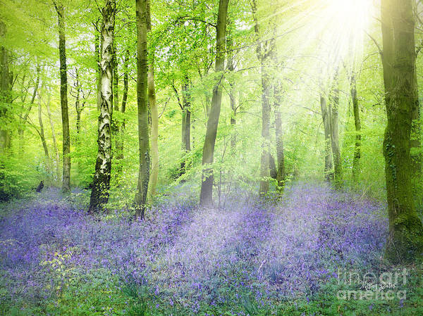 The Bluebell Woods Poster