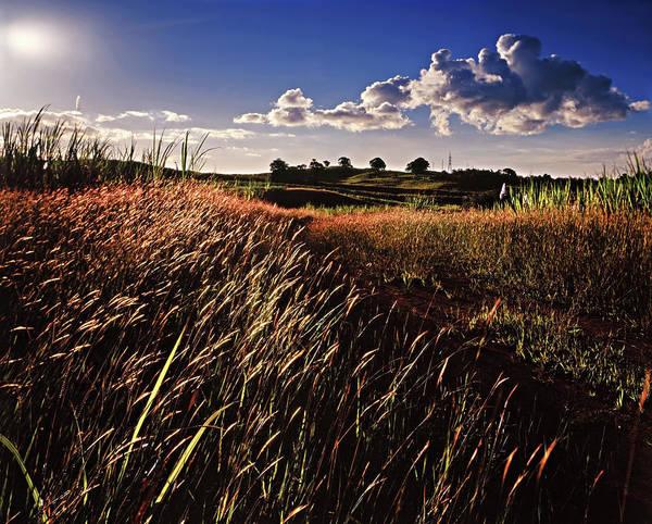 The Last Grassy Field, Trinidad Poster