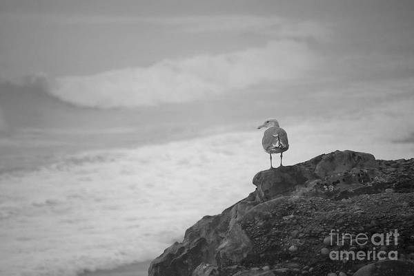 Poster featuring the photograph The Lone Gull by Jeni Gray