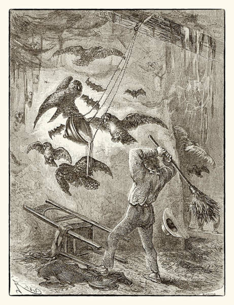 The Owl's Revenge Poster