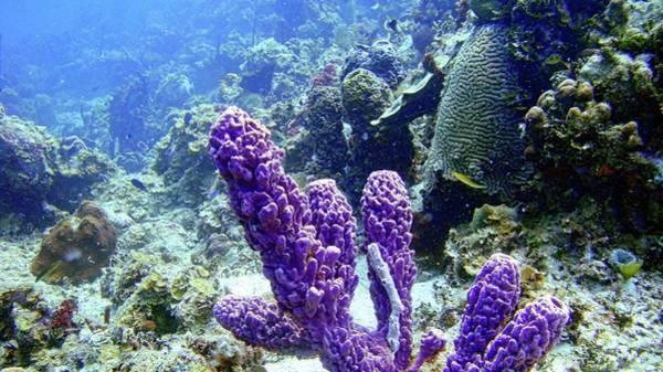 The Purple Sponge Poster