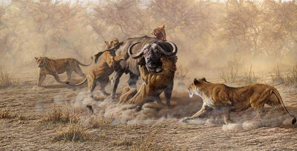 Poster featuring the painting The Take Down - Lions Attacking Cape Buffalo by Alan M Hunt