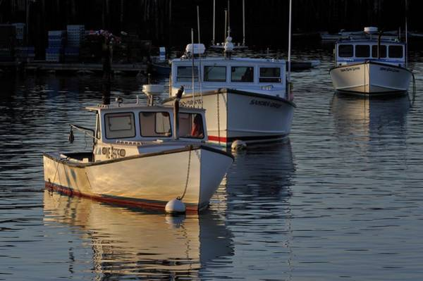 Three Boats In Maine Poster