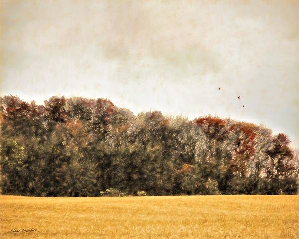 Three Crows And Golden Field Poster