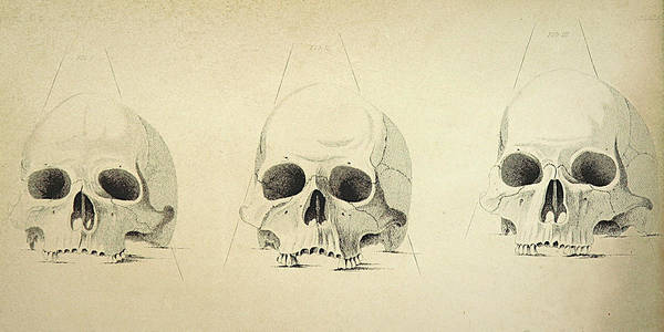 Three Skulls Poster