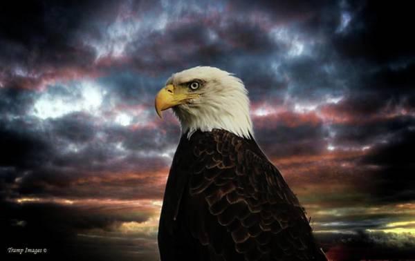 Thunder Eagle Poster