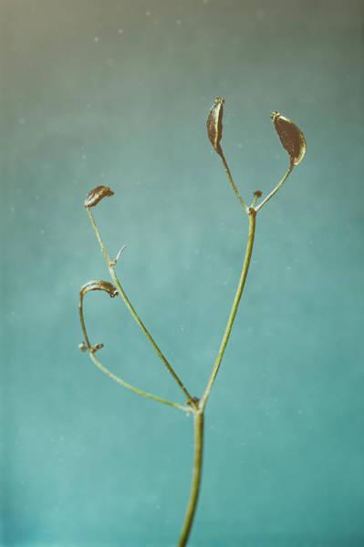 Tiny Seed Pod Poster