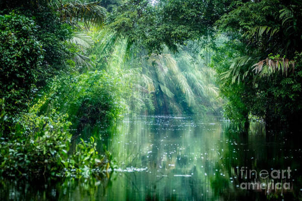 Tortuguero National Park, Rainforest Poster