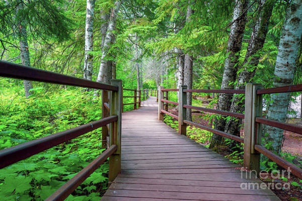 Trail At Gooseberry Falls Poster