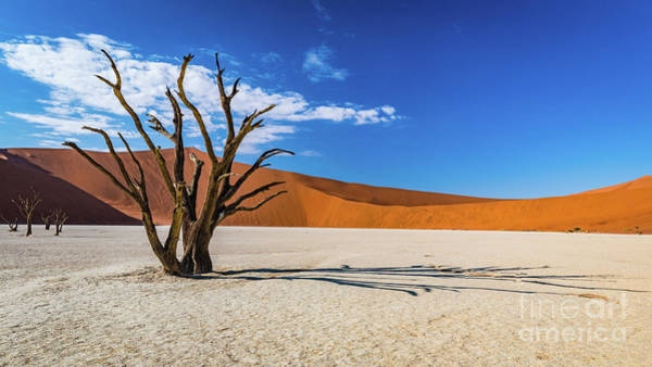 Tree And Shadow In Deadvlei, Namibia Poster