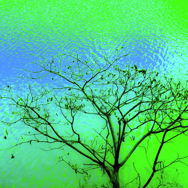 Tree And Water 3 Poster