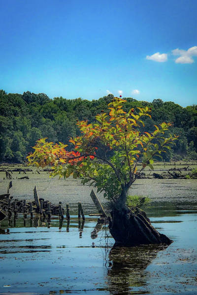 Poster featuring the photograph Tree In Mallows Bay by Lora J Wilson