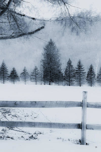 Trees In Frost Valley Poster