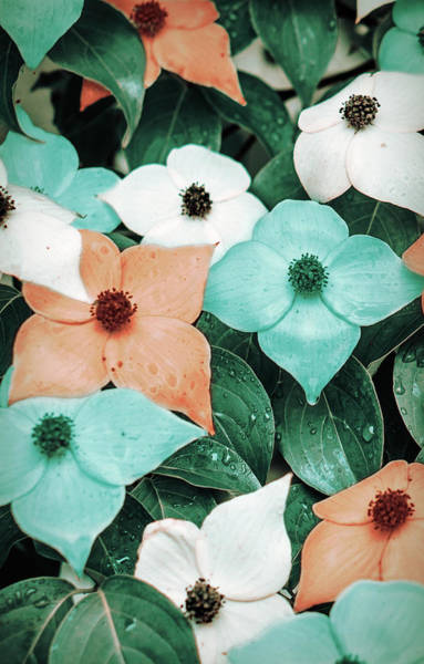 Tropical Dogwood Flowers Poster