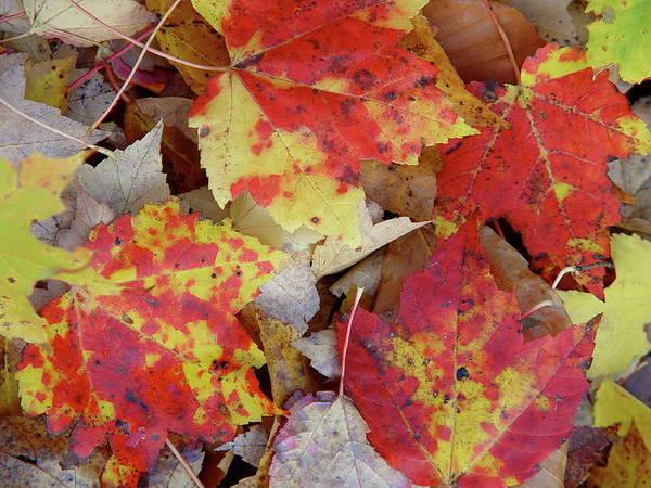 True Autumn Colors Poster
