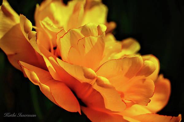 Tulip Exposed Poster