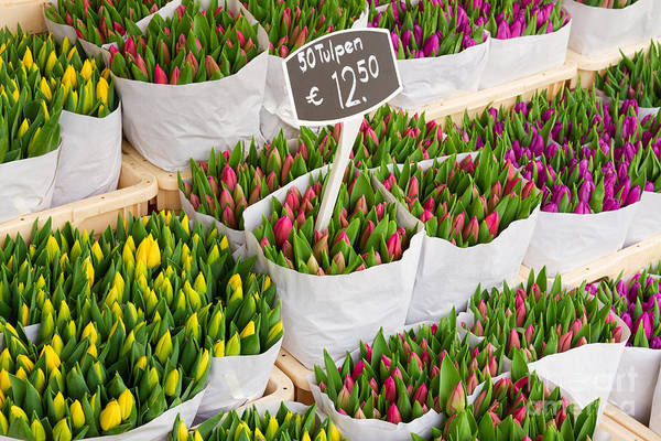 Tulip Flowers From Holland For Sale Poster