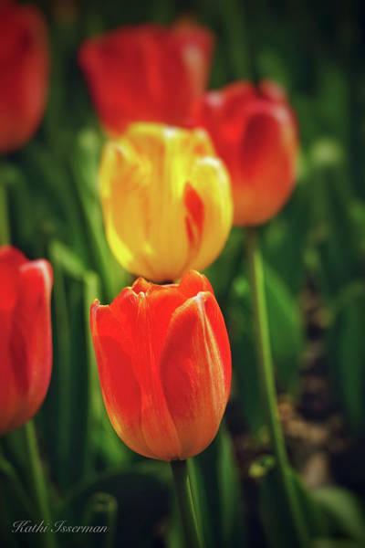 Tulips 2019b Poster
