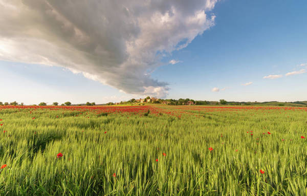 Poster featuring the photograph Tuscany Wheat Field Dotted With Red Poppies by Mirko Chessari