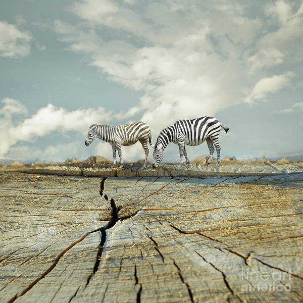 Two Zebras In A Surreal Landscape Poster
