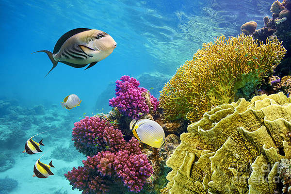 Underwater Scene With Coral Reef And Poster
