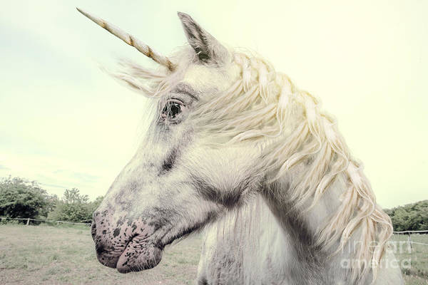 Unicorn Photography Realistic Poster