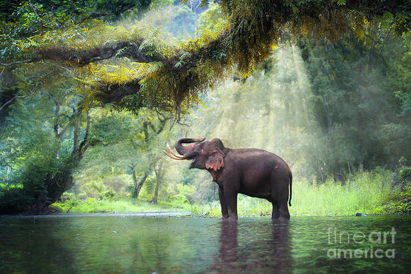 Wild Elephant In The Beautiful Forest Poster