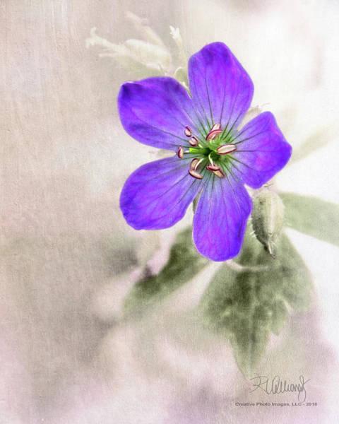 Wild Geranium Poster