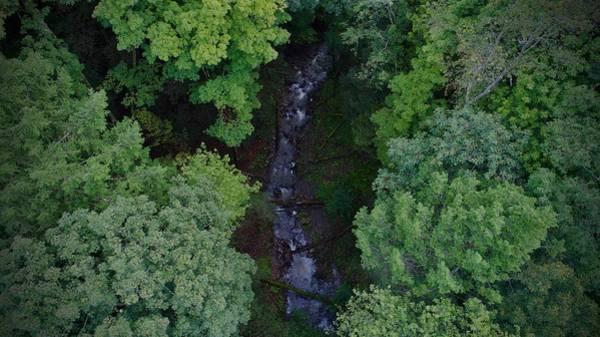 Willow Run Creek Poster