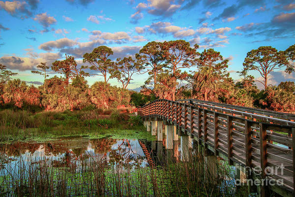 Poster featuring the photograph Winding Waters Boardwalk by Tom Claud