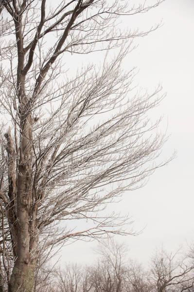 Winter Hoarfrost Poster