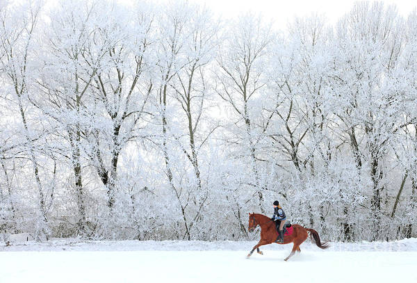 Woman And Her Horse Cantering In Fresh Poster