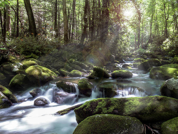 Poster featuring the photograph Woodland Falls by Patti Deters