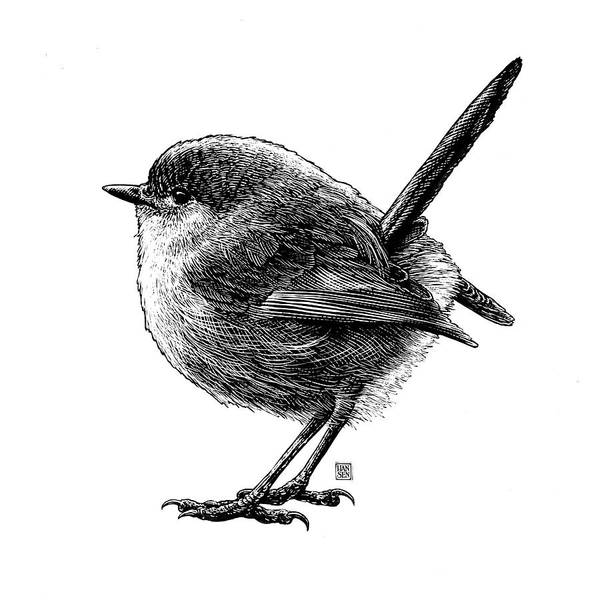 Poster featuring the drawing Wren by Clint Hansen