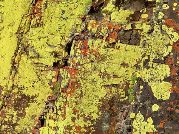 Yellow Lichens 2 Poster