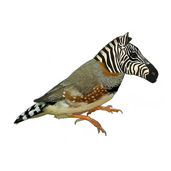 Poster featuring the drawing Z Is For Zebra Finch Thats Not A Zebra Finch by Joan Stratton