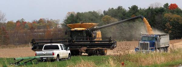Dump Truck Photograph -       Fall Soy Bean Harvest by R A W M