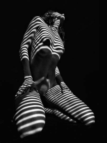 Photograph -  2451 Abstract Bw Kneeling Nude Zebra Woman  by Chris Maher
