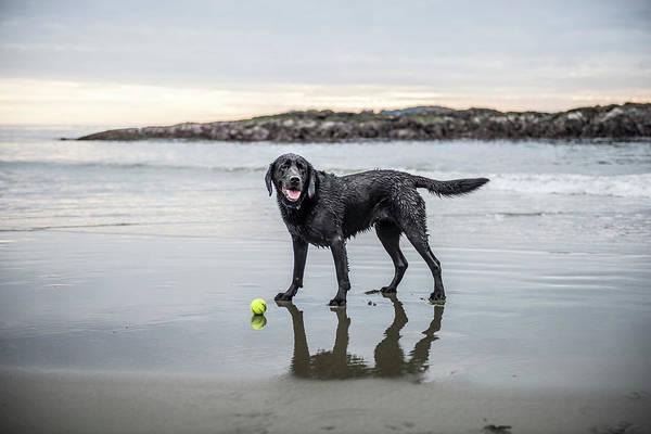 A Dog On A Beach With A Ball Art Print