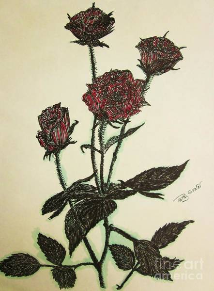 Drawing -  A Garden Rose by Patsy Gunn