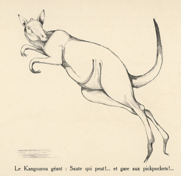 Kangaroo Drawing -  A Giant Kangaroo Leaping by Mary Evans Picture Library
