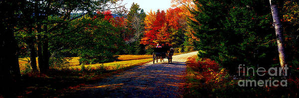 Acadia National Park Carriage Trail Fall  Art Print