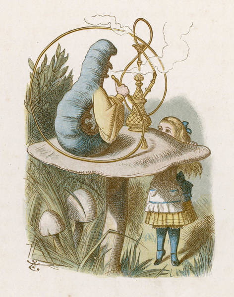 Wall Art - Drawing -  Alice And The Caterpillar         Date by Mary Evans Picture Library