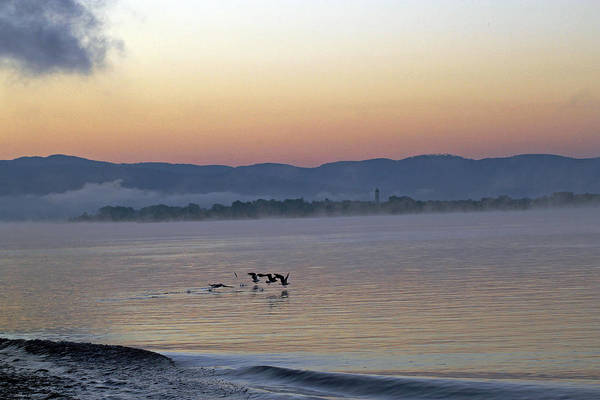Photograph -  Birds At Dawn by Tony Murtagh