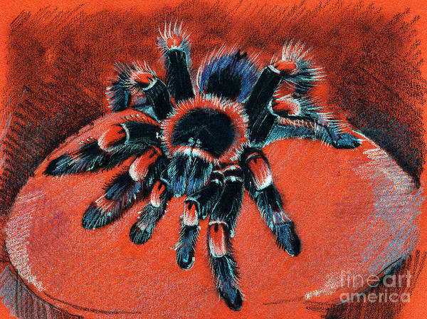 Drawing -  Brachypelma Smithi Redknee Tarantula  by Daliana Pacuraru