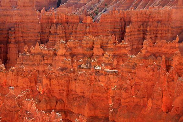 Photograph -  Bryce Canyon Hoodoos by Aidan Moran
