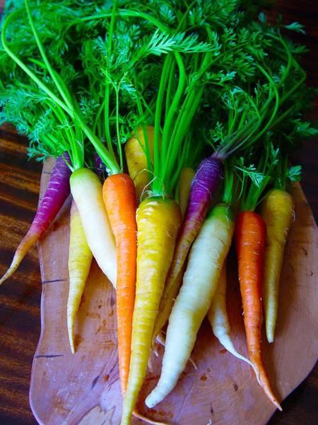 Brillante Photograph -   Carrot Top by Roxanne Brillante-Justice